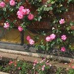 roses everywhere