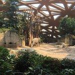 Bilde fra Zoo Zurich