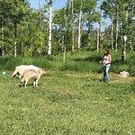 Bilde fra Yamnuska Wolfdog Sanctuary