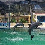 Melka Excelsior Dolphin & Wildlife Resort의 사진