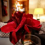 beautiful blood red flower in reception