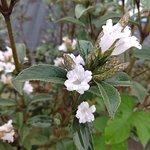Kurunji Flower blossoms once in 12 yrs