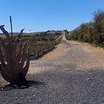 Bilde fra Finca Canarias Aloe Vera