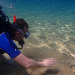 exploring the marine life