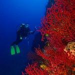 Kırmızı Mercan