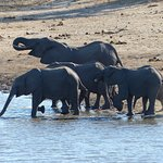 Family of elephants at the nearby watering hole