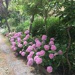 Un luogo incantato. Tanti fiori in ogni stagione