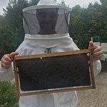 Foto de Dias Beekeeping
