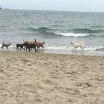 Rosie's Dog Beach resmi