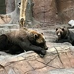The brown bears were amazing to see.