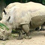Three impressive rhinos
