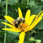 Pollination garden is doing it's job!