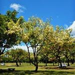 Billede af Kapiolani Park