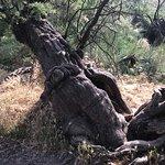 Photo of Tablas de Daimiel National Park