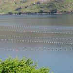 Bilde fra Killary Fjord