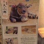 Фотография Haimurubushi