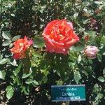 Foto de Rose Garden (Rosengarten)