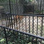 Foto di Phuket Zoo