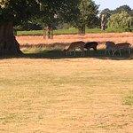 Photo of Bushy Park