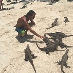 My freinds the Iguanas