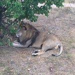 Bilde fra Taigan Lions Park