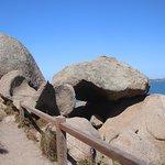 An octopus rock
