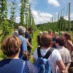 Visite des champs de houblon