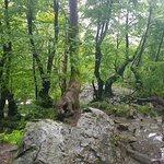 Valokuva: Boyana Waterfall