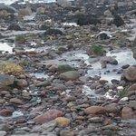 Kamienista część plaży.