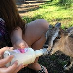 We all enjoyed the animals: from bottle feeding baby goats, petting friendly dogs, seeing deer o