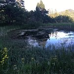 Turtle pond, wetlands, forest trails and farm all on the 440 acres