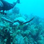lots of sea turtles!