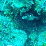 Bild från Mayan Divers