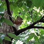 Bilde fra Harrison Park