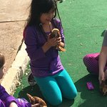 My daughter playing with baby chicks they are raising.