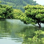Phu Long Mangrove Forest Tours
