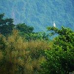 Phu Long Mangrove Forest Tours