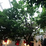 Bild från El Patio De Mariscal