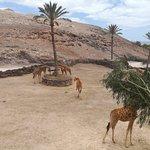 Фотография Oasis Park Fuerteventura