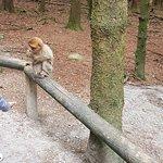 Φωτογραφία: Affenberg - Monkey Hill