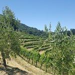 The vinyards