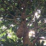 Foto de Gamboa Rainforest Resort Radio Station Tour