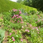 Valokuva: Coton Manor Gardens