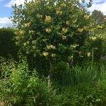 Foto Coton Manor Gardens