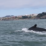 This whale came right up next to the boat!!