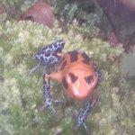 Bilde fra Shedd Aquarium