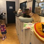 Great little cat cafe that is kid friendly! My Girls, ages 3 and 6, loved it.