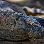 Bilde fra Wisata Pulau Komodo
