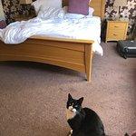 Снимок Castleview Bed & Breakfast