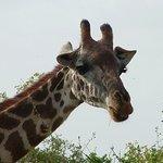 Occhi da...giraffa